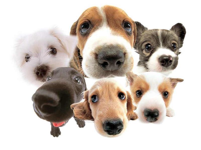 Лучшие Android приложения и гаджеты для ухода за любимой собакой